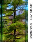 Reflecting trees in a large window at Sycamore Shoals State Historial Park Building
