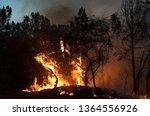 fire at san buenavista woods ... | Shutterstock . vector #1364556926