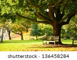 bench under the tree in the...