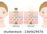 mechanism of skin cell turnover ... | Shutterstock .eps vector #1364629676