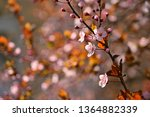 spring flowers. beautifully...   Shutterstock . vector #1364882339