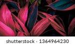 leaf or  plant cordyline... | Shutterstock . vector #1364964230