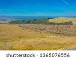 deforestation of pine trees ... | Shutterstock . vector #1365076556