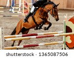 equestrian on horse jumping... | Shutterstock . vector #1365087506