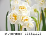 white narcissus | Shutterstock . vector #136511123