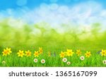 spring flowers and green grass... | Shutterstock . vector #1365167099