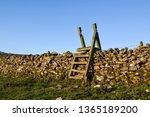 wooden wall ladder over dry... | Shutterstock . vector #1365189200