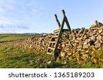 wooden wall ladder over dry... | Shutterstock . vector #1365189203