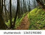 Path Through A Deciduous Fores...