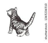 Stock vector kitten hand drawing vector illustration kitten sketch curious kitten 1365236510