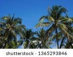 nature scene uprisen angle of... | Shutterstock . vector #1365293846
