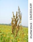 nature scene of closeup flowers ... | Shutterstock . vector #1365301439