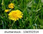 Dandelion On Green Background