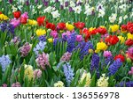 Colorful Spring Garden With...