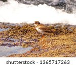 sea   bird animal birdwatching | Shutterstock . vector #1365717263