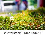 nature leaf green background   Shutterstock . vector #1365853343