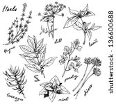 fresh herbs | Shutterstock .eps vector #136600688