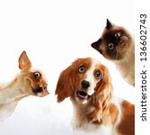 Stock photo three home pets next to each other on a light background funny collage 136602743
