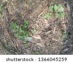 forest glade with needles.   Shutterstock . vector #1366045259