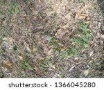 forest glade with needles.   Shutterstock . vector #1366045280