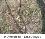 forest glade with needles.   Shutterstock . vector #1366045283