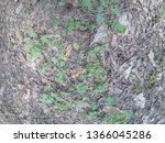 forest glade with needles.   Shutterstock . vector #1366045286