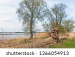 on the bank of the wide dutch... | Shutterstock . vector #1366054913