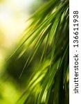 bamboo leaf   shallow dof | Shutterstock . vector #136611938
