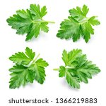 parsley. parsley isolated.... | Shutterstock . vector #1366219883