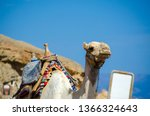 portrait of a camel with blank... | Shutterstock . vector #1366324643