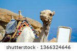 portrait of a camel with blank... | Shutterstock . vector #1366324646