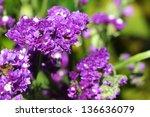 Purple Statice Flowers