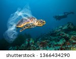 Small photo of Underwater concept of global problem with plastic rubbish floating in the oceans. Hawksbill turtle in caption of plastic bag