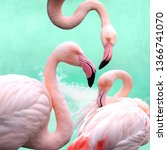funny  bright pink flamingos in ... | Shutterstock . vector #1366741070
