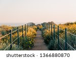 yellow flowers and trail at...   Shutterstock . vector #1366880870