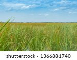 wide reed covered flat wetlands ... | Shutterstock . vector #1366881740