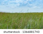 wide reed covered flat wetlands ... | Shutterstock . vector #1366881743