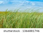wide reed covered flat wetlands ... | Shutterstock . vector #1366881746