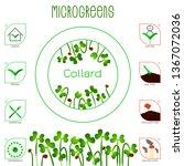 microgreens collard. seed...   Shutterstock .eps vector #1367072036