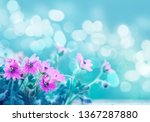 beautiful flowers background ... | Shutterstock . vector #1367287880