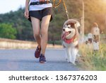 Stock photo woman doing daily exercise jogging on the public park road with puppy breed dog 1367376203