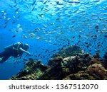 underwater photo take during a... | Shutterstock . vector #1367512070