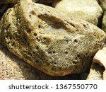 big sea rock on the seashore   Shutterstock . vector #1367550770
