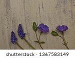 Blue Flower Muscari Bulbous...
