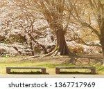 Empty Bench In The Garden...