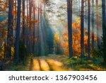 autumn. autumn forest. forest... | Shutterstock . vector #1367903456