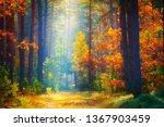 autumn landscape. fall... | Shutterstock . vector #1367903459