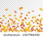 oak  maple  wild ash rowan... | Shutterstock .eps vector #1367986430