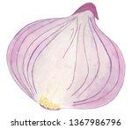 watercolor onion illustration | Shutterstock . vector #1367986796