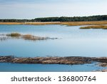 A Salt Water Marsh In South...
